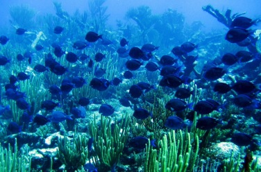 Travel-Cutie-diving in Sipadan Island during visit to Borneo Malaysia free Hotel Le Meridien Kota Kinabalu