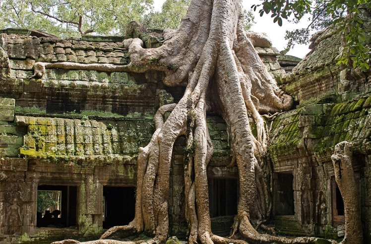 Ta-Prohm-Angkor-Wat-Siem-Reap-Cambodia-Ruins