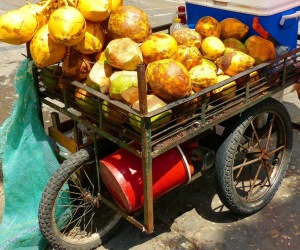 Fresh-coconuts-in-Cartagena-Colombia